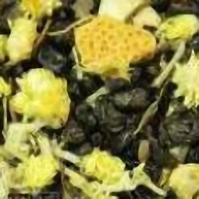 Зелений чай «Лайм-Базилік»