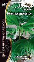 Семена цветов Пальма Вашингтония, 5 сем
