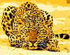 Картина по номерам MENGLEI Леопард (MG305) 40 х 50 см