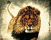 Раскраска по номерам MENGLEI Царь зверей (MG311) 40 х 50 см