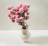 Сухоцветы, гомфрена розовая, фото 5