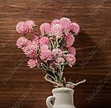 Сухоцветы, гомфрена розовая, фото 7