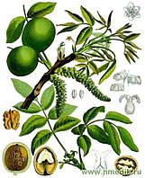 Чайное дерево и Зеленый грецкий орех - эффективный дуэт
