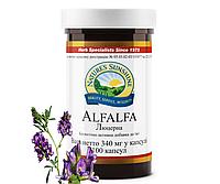 Alfalfa / Альфальфа • Люцерна полевая , фото 1
