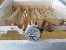 Инкубатор Автоматический Рябушка Smart Turbo 48 яиц , фото 2