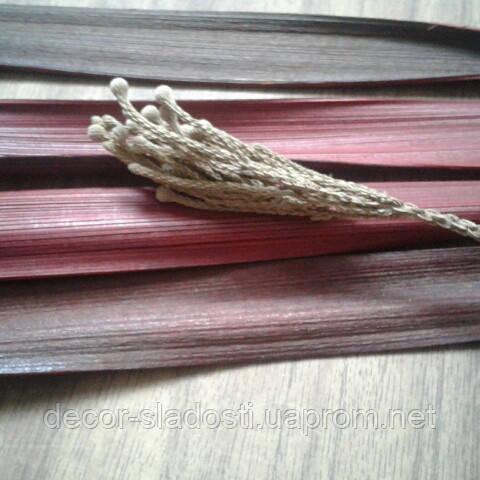 Сухоцвет бруния