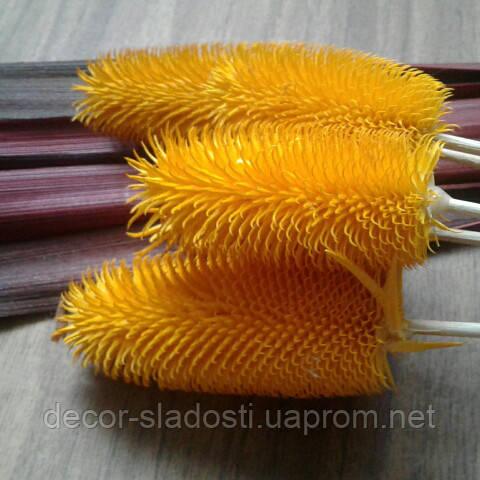 Сухоцвет колючки кардо