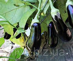 ЛС 1322 F1 насіння баклажану раннього Lucky Seed 100 насінин