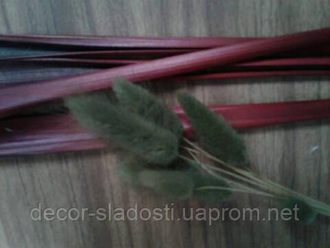 Сухоцвет лагурус оливковый(10штук в пучке)