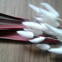 Сухоцвет лагурус белый (10штук в пучке)