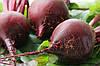 Корморезка для корнеплодов, овощей и твердых фруктов Коза Нова (ручная на ножках), фото 4