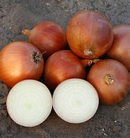 Семена лука Пандеро F1, 100 000 семян, Nunhems, фото 1
