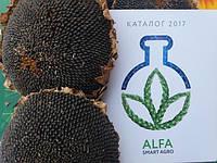 Послевсходовый гербицид для борьбы с бурьянами и падалицей по подсолнечнику МИСТАРД аналог Гранстар Про, Трибенурон метил 750 г/кг.