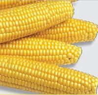 Семена кукурузы Мегатон F1 2500сем. Харрис моран.