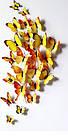 Бабочки 3D  голубые, набор 12 штук, фото 3