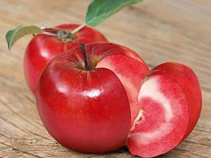 Яблоня с красной мякотью Эра  ( кронированая  2 х летка, саженцы высшего качества класс АА+), фото 2