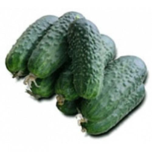 Партенокарпический огурец средний гибрид Циркон F1, семена профупаковка 1000 семян, Nunhems seeds