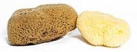 Морская губка Honeycomb натурального цвета (для лица и тела)