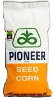 Семена кукурузы P9578 (П9578) ФАО 350