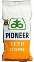 Семена кукурузы P9606 (П9606) ФАО 380