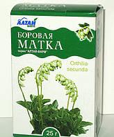 Боровая матка трава (Ортилия однобокая) 25 г