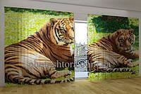 Панорамная фотоштора Бенгальские тигры
