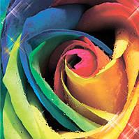 Фотообои 3Д роза 3D