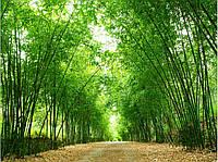 Фотообои лес , природа