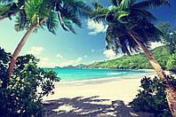 Фотообои пальмы,море