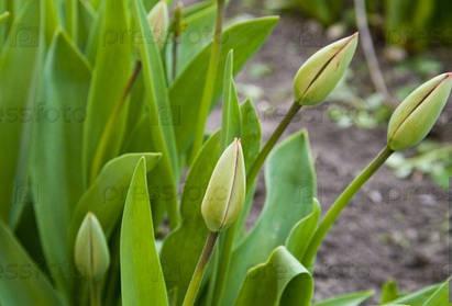 Весенние нераспустившиеся цены на окна Rehau к старту сезона!