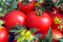 Томат Джина 10 г (перефасовано Vse-semena)