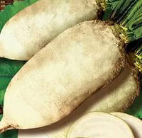 Семена кормового буряка Центаур поли, 500 г, Польша