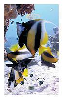 """Газовий проточний водонагрівач Matrix принт """"рибки"""" (стекло) - 10 л\мин"""