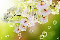 Фотообои орхидеи пузыри 3D