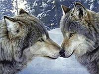 Алмазная вышивка влюбленные волки 20х25 см, полная выкладка, квадратные стразы