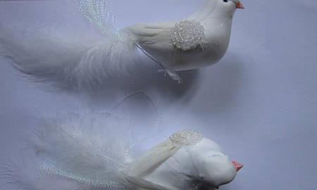 Голуби декоративные, флористика, оптом