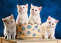 "Пазли Castorland 500 елементів ""Кошенята у чашці"", 47*33см"