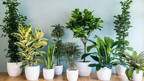 Насіння кімнатних рослин і балконні грядка