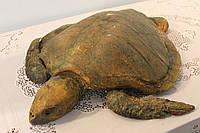Тихоокеанская черепаха, фото 1