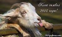 Встречаем Новый год 2015 - Год Синей Деревянной Козы