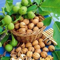 Саженцы привитого грецкого ореха ПЕСЧАНСКИЙ трехлетний, фото 1