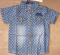 Джинсовая рубашка на мальчика оптом, S&D, 1-5 лет,  № KK-586