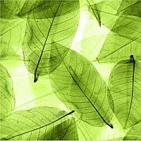 Фотообои листья, фоны