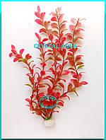 Растение 36см №11
