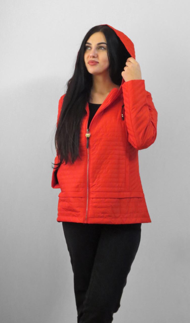 Демісезонна куртка утеплена. Нова колекція QARLEVAR 2XL-6XL (46-56)