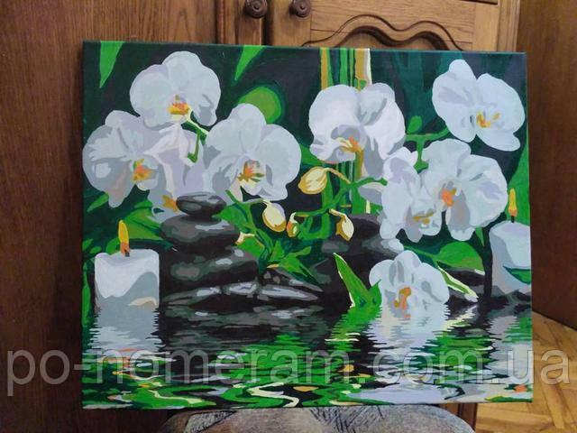 Картина по номерам орхидея