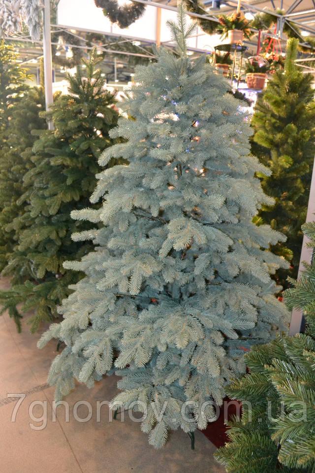 Искусственная елка литая Альпийская голубая С024 от 1.2 с до 3 метров купить