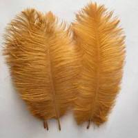Перо страусовое в золотом цвете 30-35 см.
