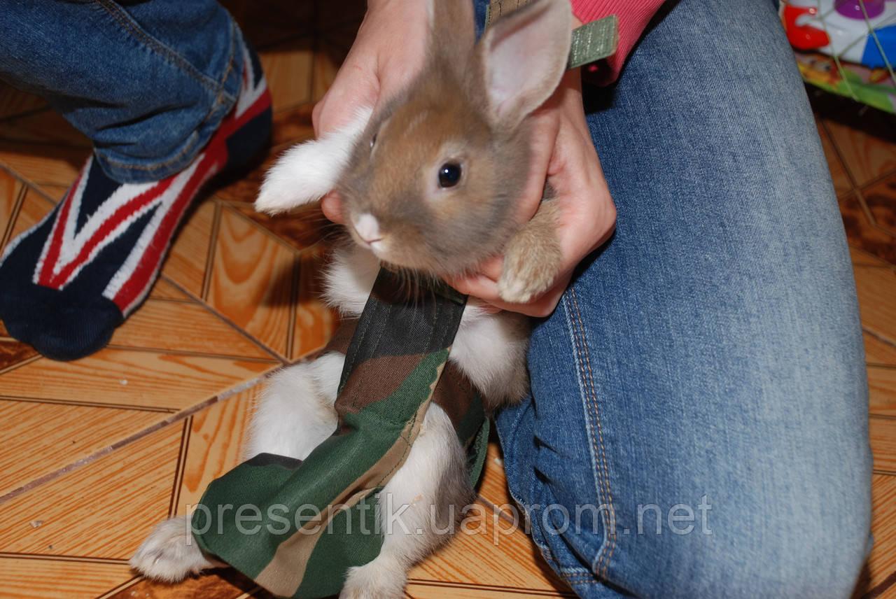 Костюм для выгула кроликов 9d9a8e036709b