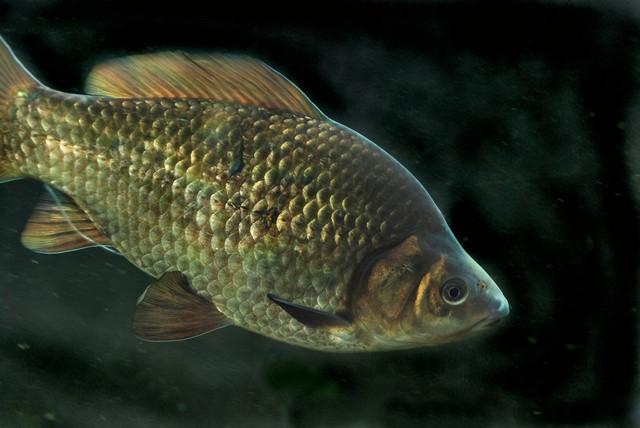 Рыболовный прогноз на 15 и 16 октября.